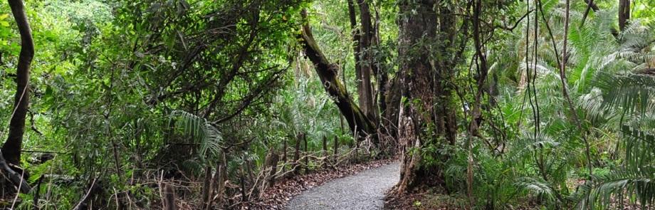 Victoria Falls Forest