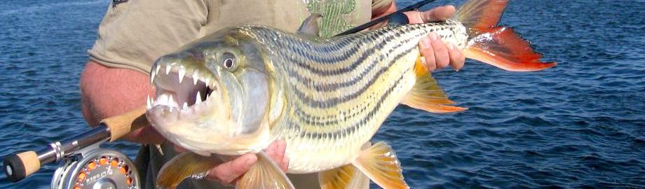 Zambezi River Tiger Fishing