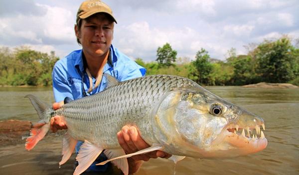 tiger fishing in victoria falls