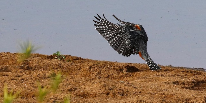 birding victoria falls