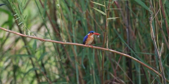 bird watching in victoria falls