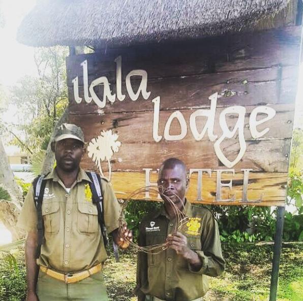 Poaching Victoria Falls